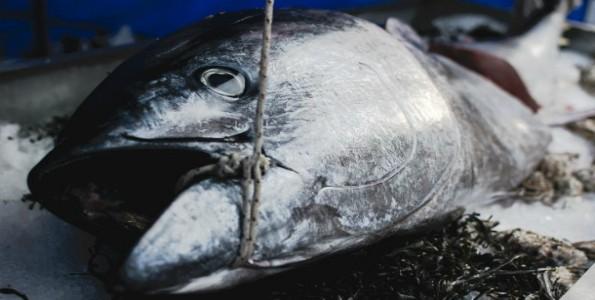 Pesca de calidad