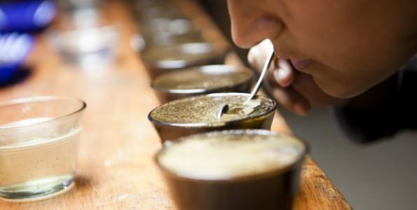 Realizarán un curso de certificación de catadores de café