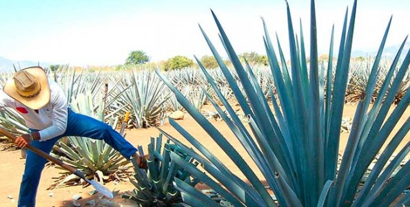 Brasil reconocerá la denominación de origen de tequila