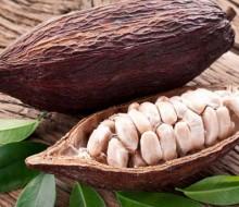 Impulso a la industria del cacao