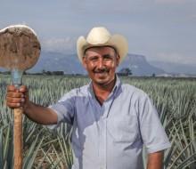 Se produce y se exporta más tequila