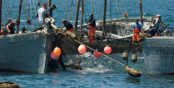 Un laberinto que captura atunes