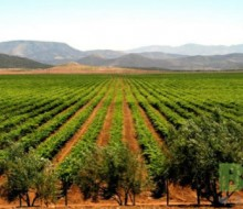 Ruta del Vino en Baja California