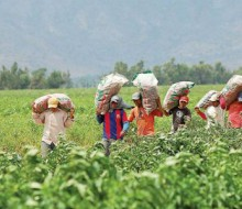 Perú, un potencial de exportación a la India