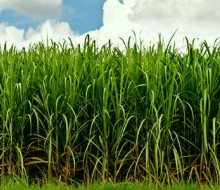México venderá nueve ingenios azucareros