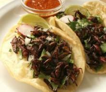 Los chapulines en la cocina mexicana